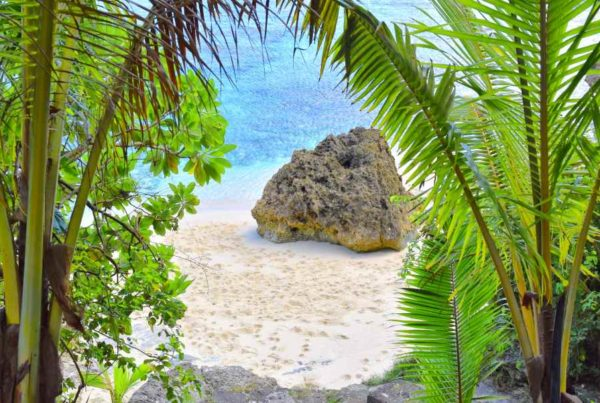 The Best Time to Visit Niue