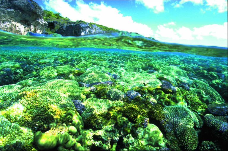 The Complete Guide to Spearfishing in Niue