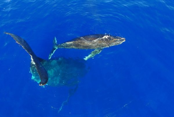 How to Get the Best Whale Swimming Experience in Niue