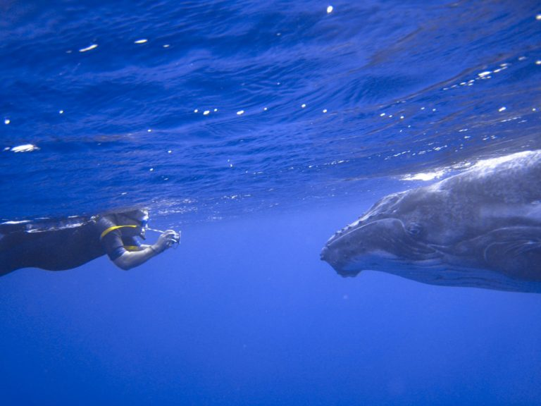 The Best Time to Swim with Whales in Niue
