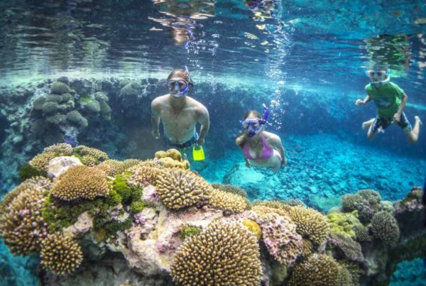 The Guide to Snorkelling in Niue