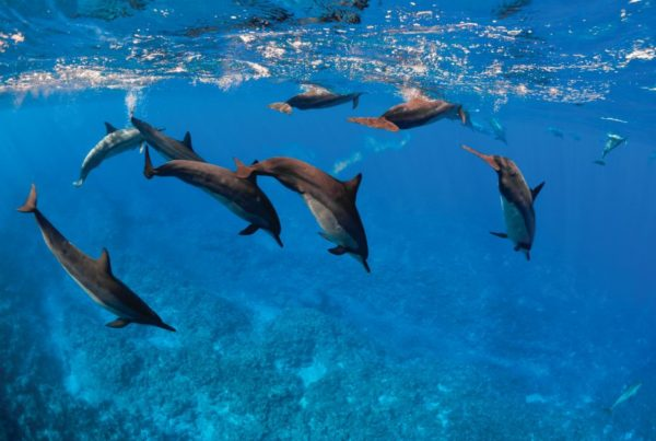 The Guide to Swimming with Dolphins in Niue