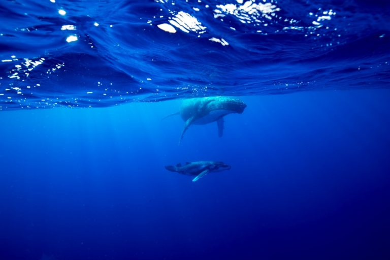 10 Tips for Whale Watching in Niue