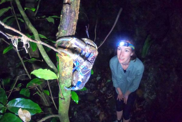A Traveller's Guide to the Wildlife in Niue