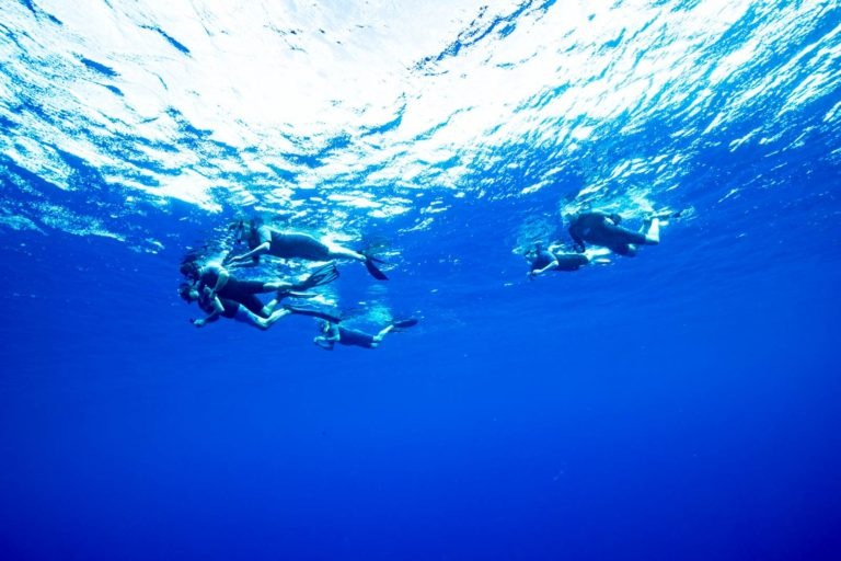 The Guide to Swimming with Whales in Niue