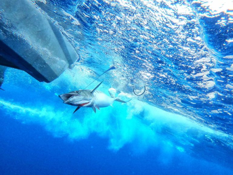 The Guide to Fishing in Niue