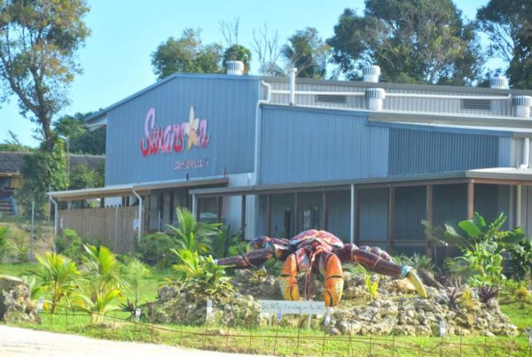 Where to Buy Food in Niue