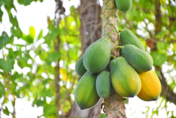 9 Exotic Fruits in Niue You Have to Try