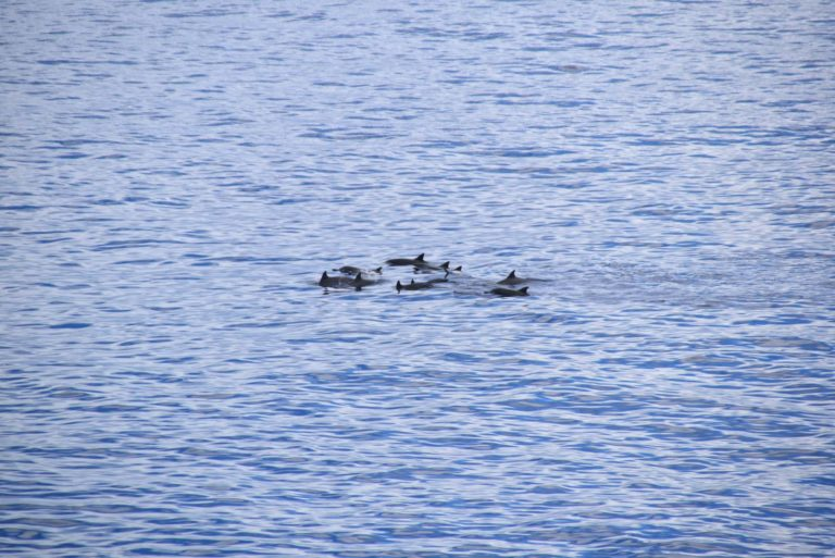 10 Best Lookouts for Watching Dolphins in Niue