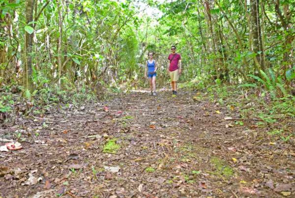 The Guide to Walks in Niue